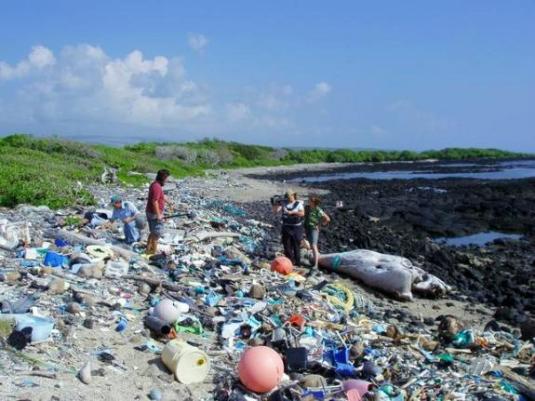 環太平洋垃圾帶_海岸